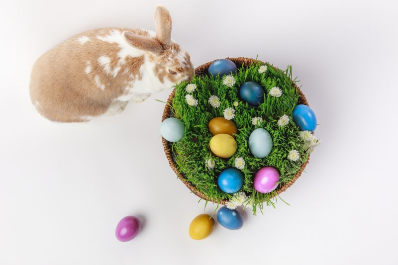 Natural, environmentally friendly Easter Egg dye